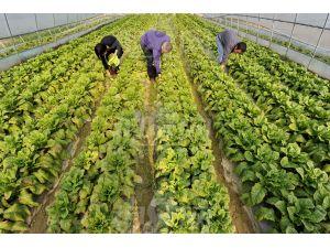 热烈庆祝本公司经理与山东大棚蔬菜种植用户签订240吨有机肥订单