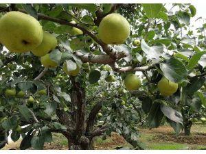 热烈庆祝我公司赵经理与隆尧新苗木种植合作社签订合同