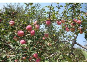 庆祝本公司与陕西洛川苹果种植合作社签单成功